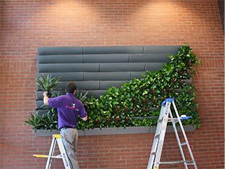 Living Green Walls Plantscape Inc