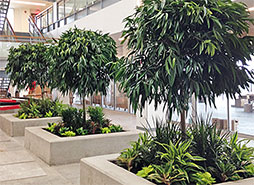 After We Install Plants At Your Business Or Commercial Location It Takes Several Weeks For The To Adjust Suffer Shock When Moved From One