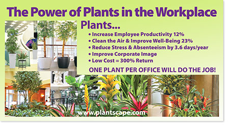 The Power Of Plants In The Workplace